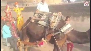 Gangaur celebrating in Tamkor (टमकोर में गणगौर की सवारी)