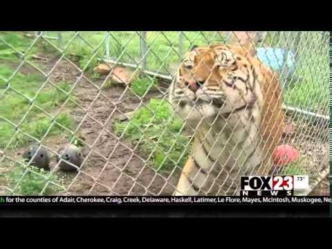 Broken Arrow Safari Sanctuary has severe weather plans