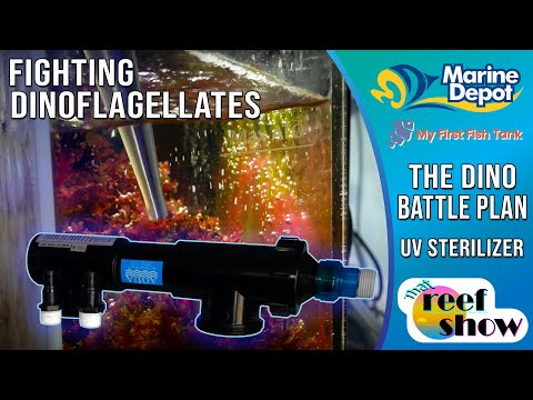 Winning the Battle Against Dinoflagellates!  How to Install a UV Sterilizer