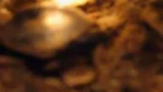 Nacimiento de un morrocoy (Geochelone carbonario)