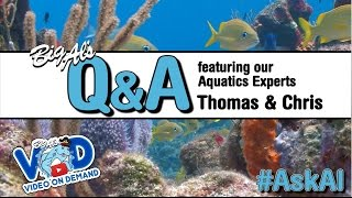 Big Al's LIVE Q&A featuring Aquatic Experts Thomas & Chris