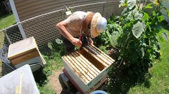 beekeeping 7-28-19 Madison Heights MI
