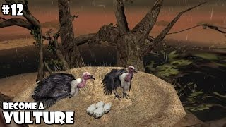Ultimate Savanna Simulator - Vulture - Android/iOS - Gameplay Part 12
