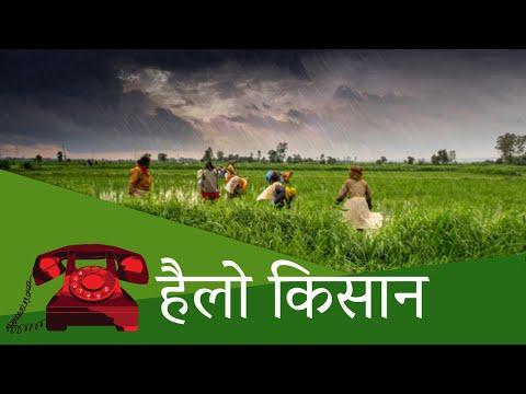 हैलो किसान : मक्के की खेती , हरे धनिये की खेती | Hello Kisan | July 15, 2020
