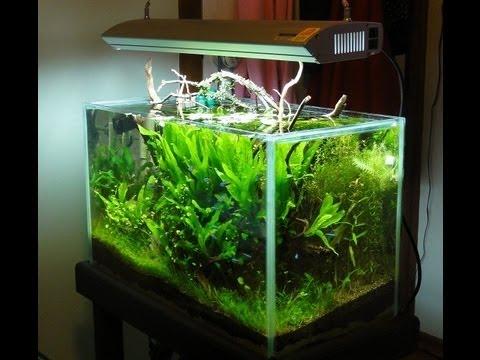 Jebo 20 gallon aquarium design freshwater aquariums for Freshwater fish for 20 gallon tank