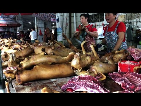 Festival das carnes