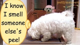 Pottymanners: 3 Doggies Pee Pee Indoors