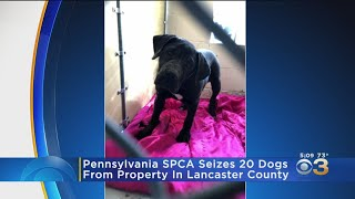 Pennsylvania SPCA Seizes 20 Dogs From Lancaster County Property