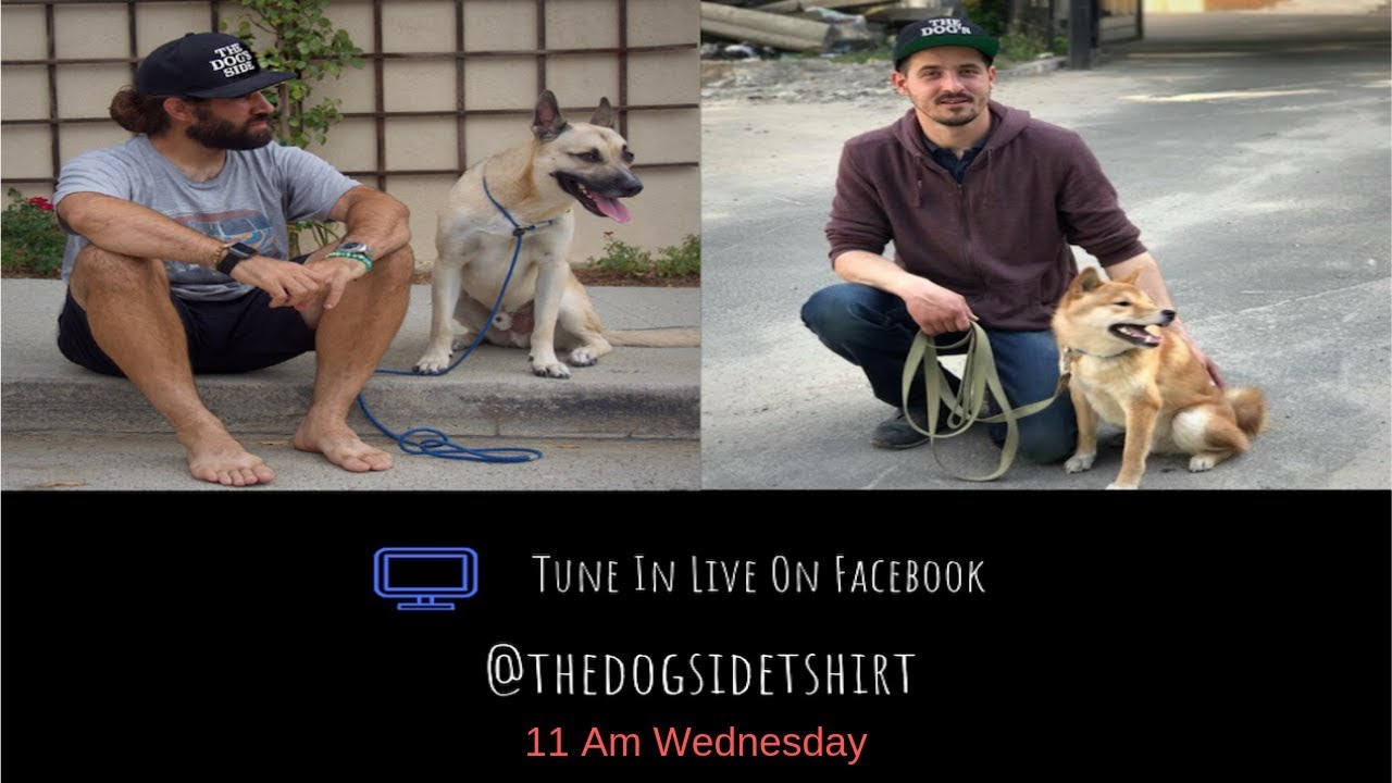 Download Gary And Artem Talk Dogs Ep 8 Part 2 - Does Playing Games With Your Dogs Change Their Behavior.