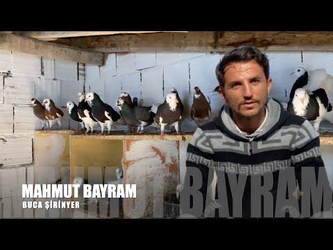 Dönek Güvercinleri Mahmut Bayram