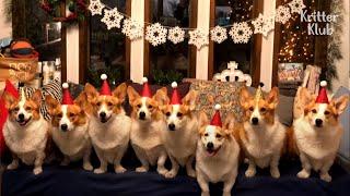 Tudo que eu quero para o Natal é .. Welsh Corgi Dogs! | Kritter Klub