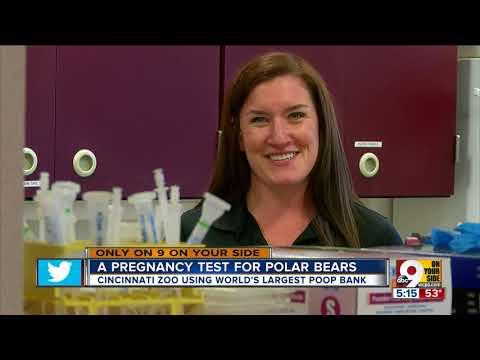 Zoo using polar bear poop for science