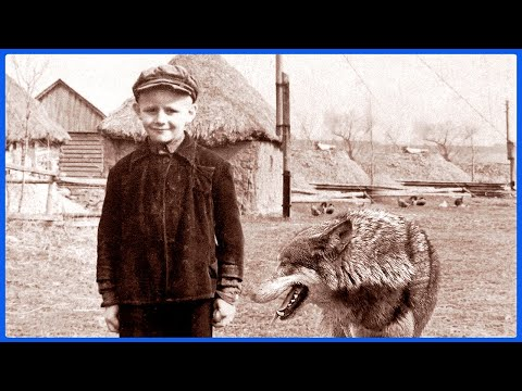 ОН СПАС  волчицу, а спустя год случилось невероятное!  Случай в тайге!