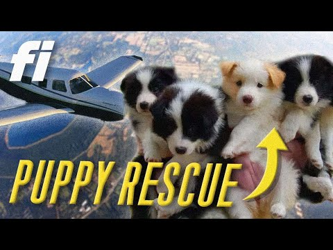 16 Puppies Rescued in Tiny Plane!