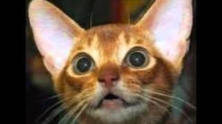 gatto matto_canzone di robberto angelini_album gatto matto