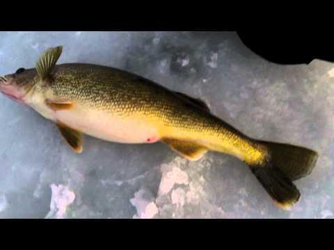 Ice fishing door county walleyes big 10 pound walleyes for Ice fishing for walleye