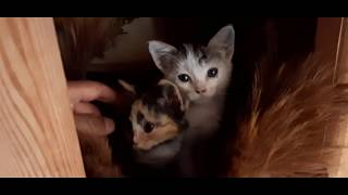 3 Kittens playing and feeling happy [Help me find names for them]