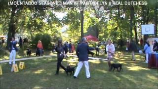 Exhibition Staffordshire Bull Terrier (vladivostok, Russia)