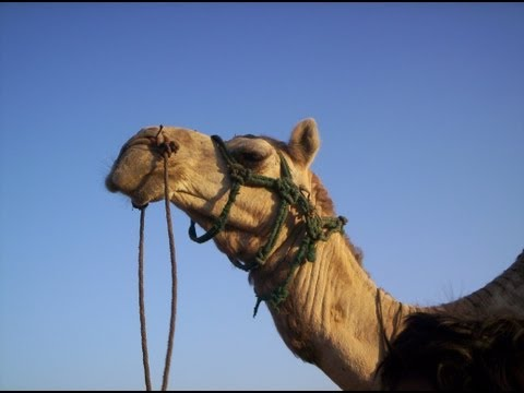 Oman Attractions & Must-See Oman Guide - Oman Tour Ideas