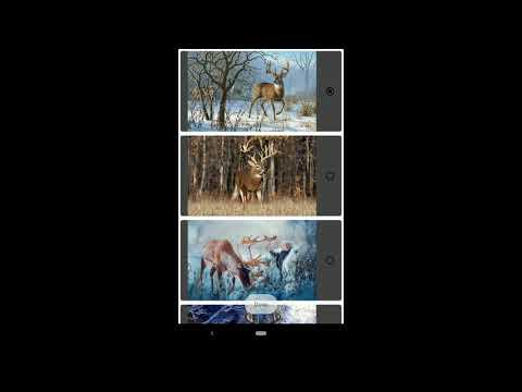 Nature Deer Live Wallpapers 4K - Apps
