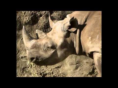 Một số hình ảnh về con tê giác