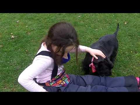 Cairn Terrier Fergus & Taylor .