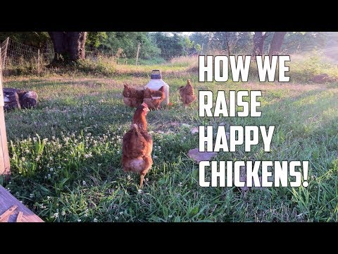 Pasture Raised Chickens: Moving your egg layers thru your fruit trees