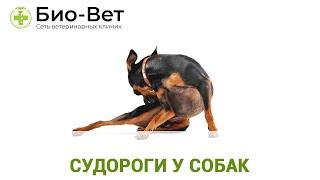 Судороги у собак. Ветеринарная клиника Био-Вет.
