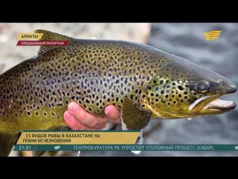 15 видов рыб в Казахстане на грани исчезновения