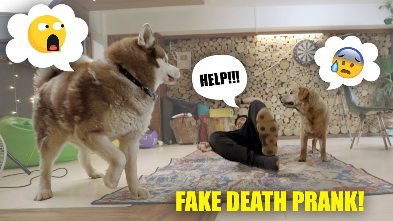 FAKE DEATH PRANK ON MAX & GHOST 😂 *AMAZING REACTIONS*