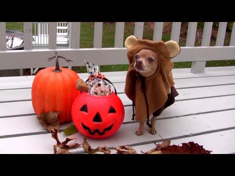 Подборка СМЕШНОГО видео с животными и людьми ! Милые собаки и кошки. Funny animals Compilation
