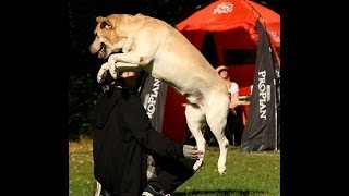 Teach Your Dog To Jump Over Your Arms!