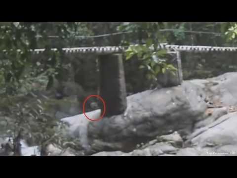 5 Criaturas Desconocidas Captado en Video y Visto en la Vida Real (Top) Nuevo 2016