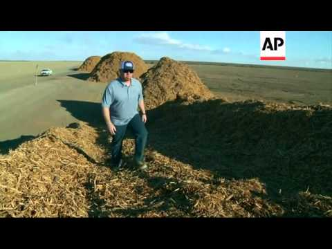 Orchards bite the dust amid severe drought