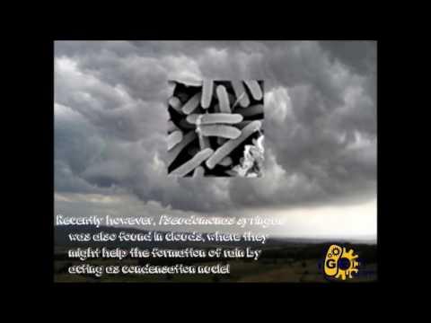 iGem UGent 2016 - Biocatalyzed atmospheric condensation