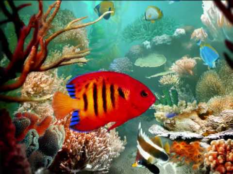 Aquarium - Charles Camille Saint-Saëns - Carnival of the Animals