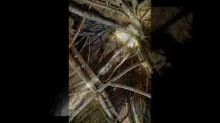 草木造り《 カーヤ 》2013 thumbnail