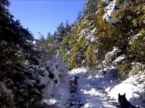 Péone, les Nanis, ballade neige et soleil2 music