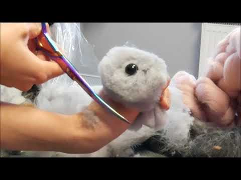PetGroooming - Perfect Exercise For Beginners Groomers