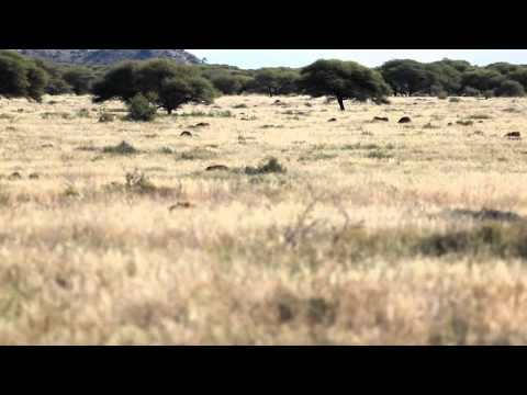 Epic fail while hunting warthogs in South Africa