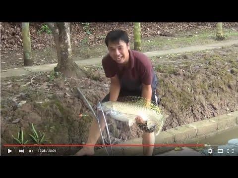 Câu cá trắm khủng 5,8kg. An Dương.Hải Phòng