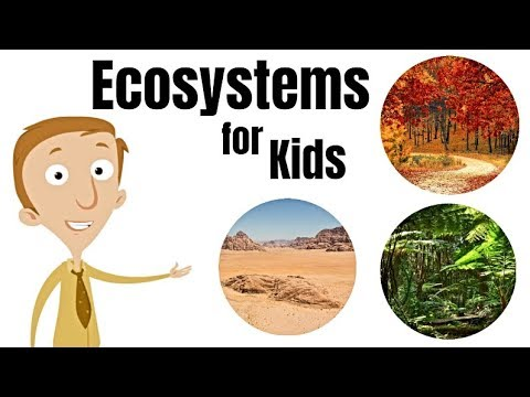 Ecosystems For Kids