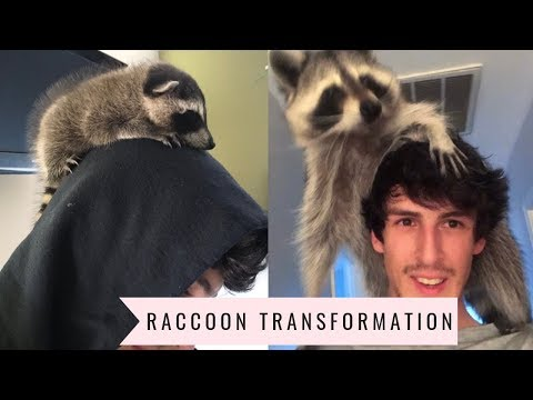 Raccoon Transformation from Baby to Adult: 1 year update