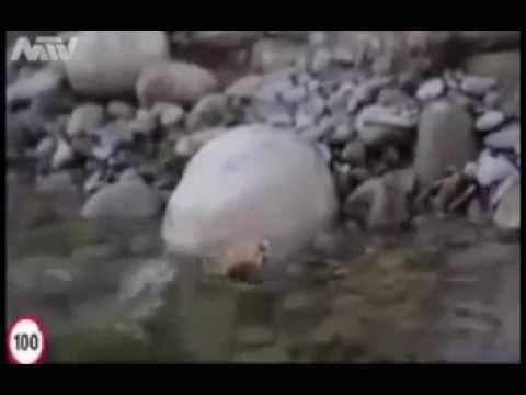 Bir karıncayı suda boğulmaktan  kurtaran ❤️ALLAH❤️
