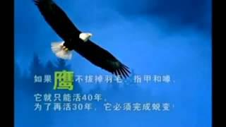 鷹之重生影片