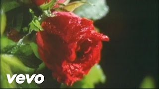 Official: http://www.hotei.com HOTEI- A Rose in the Rain [Official ...