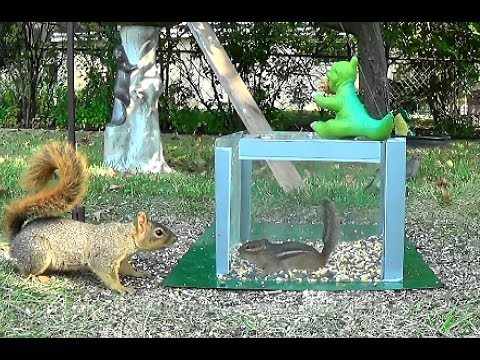 A box, a squirrel, and chipmunks