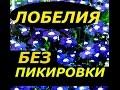 САМЫЙ ПРОСТОЙ ПОСЕВ ЛОБЕЛИИ И ПЕТУНИИ БЕЗ ПИКИРОВКИ СУПЕР СПОСОБ mp3