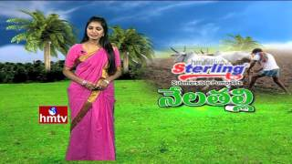 Nela Talli | Tobacco Farmers Problems | Mineral Mixture Plant | Orange Farmers Happy | HMTV