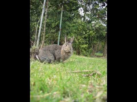 kralici borec cz - fórum o chovu králíků